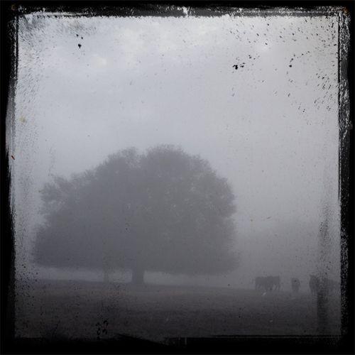Misty pasture