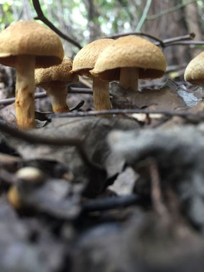 Fungus Mushroom Food Vegetable Selective Focus Growth Toadstool Plant Land Close-up Food And Drink Nature No People Day Edible Mushroom Field Tree Forest Surface Level Beauty In Nature Outdoors
