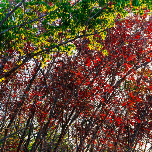 Autumn Backgrounds Beauty In Nature Branch Change Close-up Day Forest Fragility Freshness Growth Leaf Low Angle View Nature No People Outdoors Red Scenics Tranquility Tree