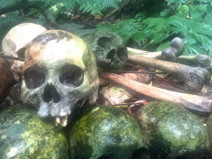 Skull and Bones Under Trunyan Banyan Tree Bali Aga Bones Cemetery Ceremony Culture Dead Death Funeral Growth Religion Ritual Skull Skulls Skulls And Bones Spirituality Traditional