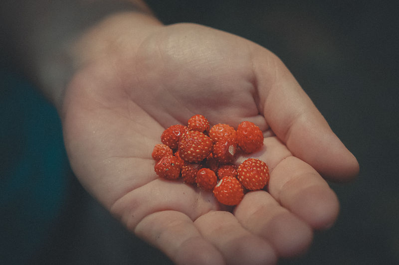 Forest strawberries in the palm of your hand close-up.