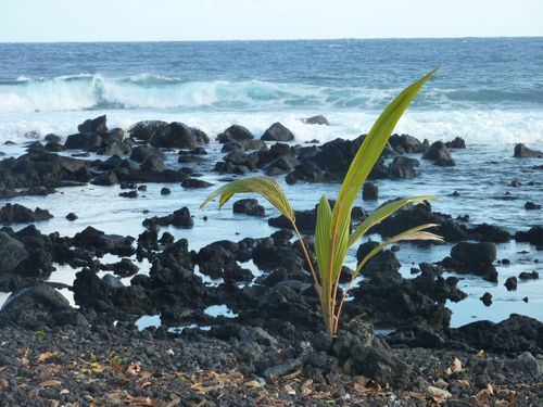 Strong Green planst Black Sand Black Sand Moments Plants 🌱 Sea Horizon Over Water Water Nature Beauty In Nature Scenics Tranquil Scene Beach No People Outdoors Day