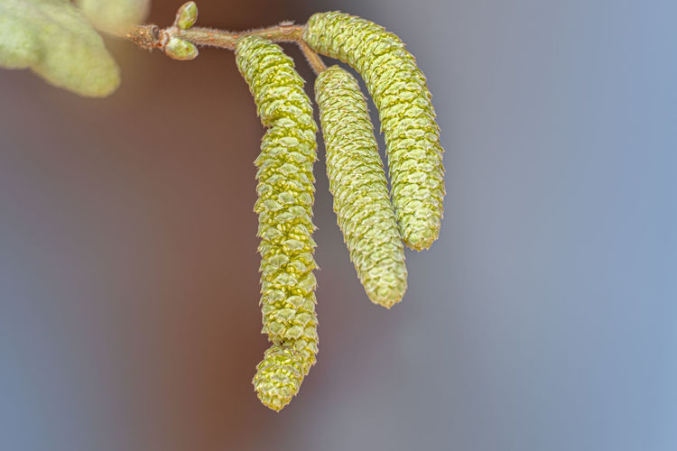 Close-up of plant on twig