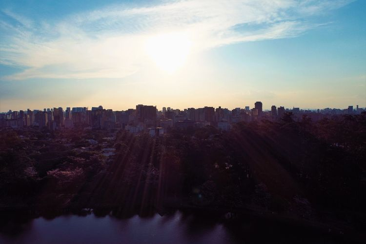 Aerial view of ibirapuera's park in the beautiful day, são paulo brazil. great landscape.