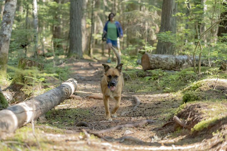 Fun Happy Running Trees Canine Chasing Cute Day Dog Doggy Domestic Domestic Animals Foreground Forest Moss Nature One Animal Outdoors Owner Pets Plant Puppy Trail Tree WoodLand