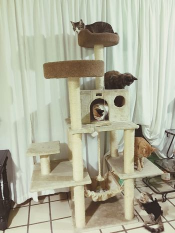 Cat LoveThem  Pets Enjoying The Moment Cute Pets