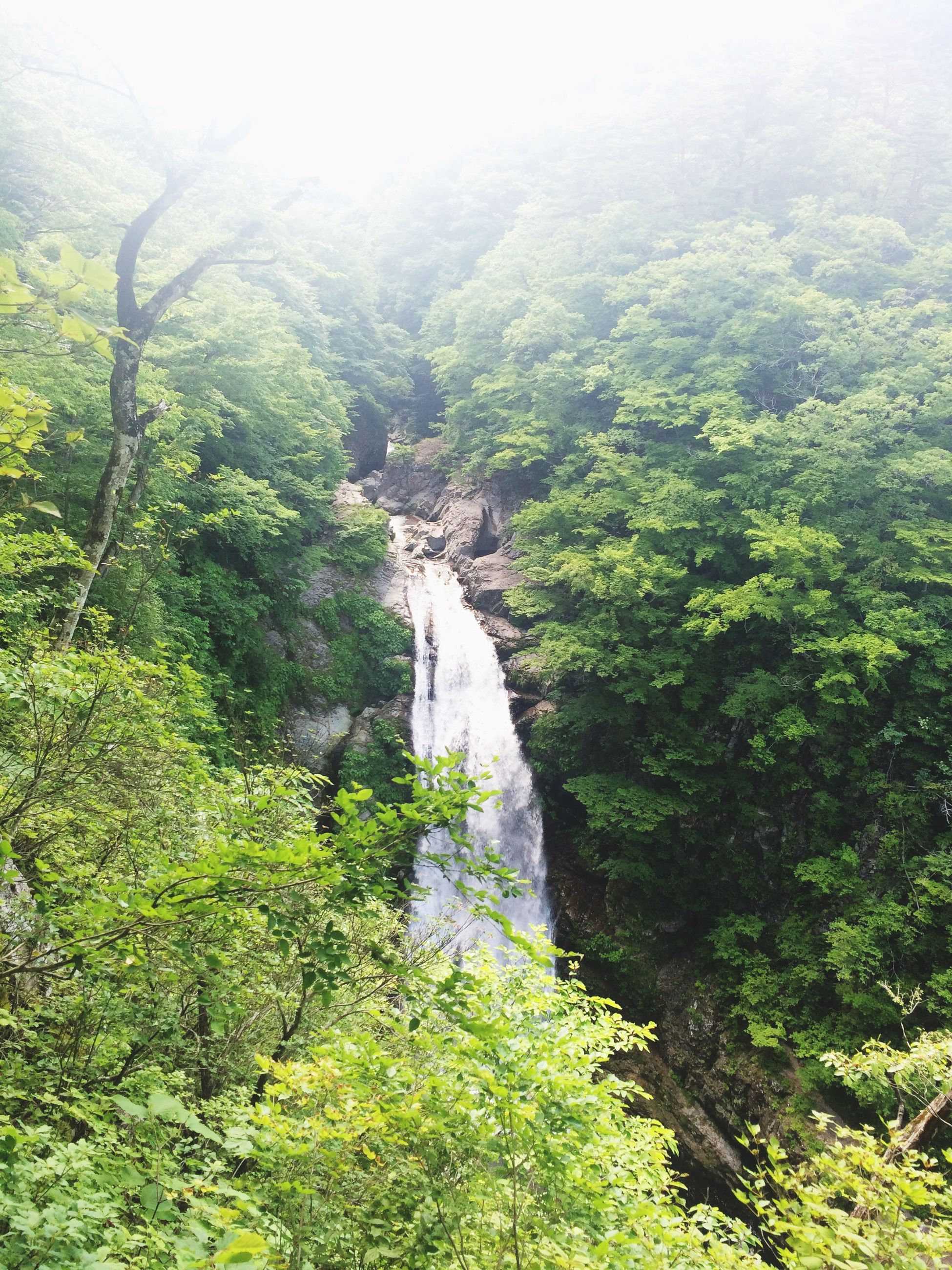 green color, beauty in nature, scenics, water, tree, nature, tranquil scene, tranquility, lush foliage, forest, growth, waterfall, idyllic, non-urban scene, plant, landscape, green, day, mountain, high angle view