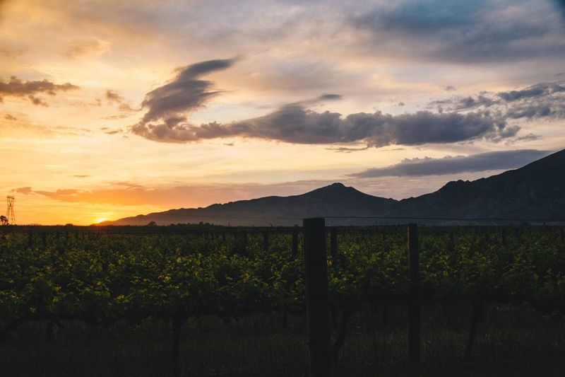Mountain view sunrise Sunset Nature Sky Scenics Beauty In Nature Vineyard Field Rural Scene Tranquil Scene Tranquility Landscape Mountain No People Agriculture Cloud - Sky Outdoors Growth Tree Day Sunrise South Africa Nikon EyeEmNewHere Nikonphotography Wine Farm