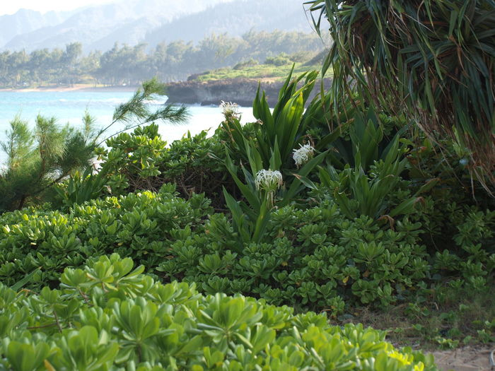 Hawai landscape Beauty In Nature Green Color Hawaii, Ocean, Trees, Palms, Leaf Nature No People Outdoors Plant Tranquil Scene Tranquility Water