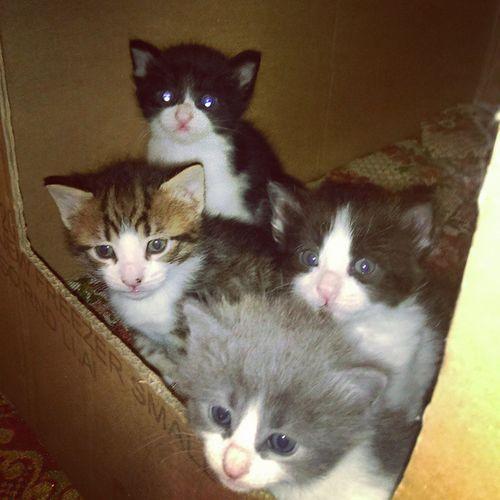 Cat Kedi Kedicik Pisicik Minnoslar