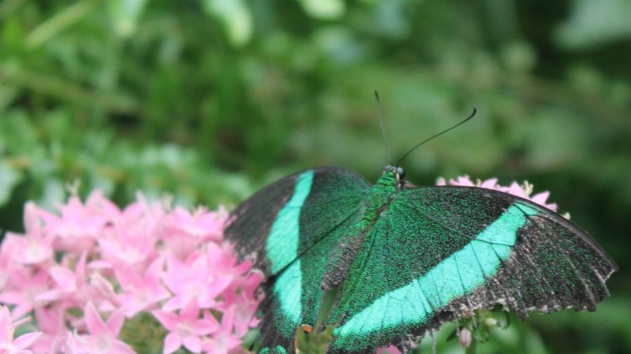 One Animal Animal Themes Animal Wildlife Animals In The Wild Animal Insect Close-up Vulnerability  Flowering Plant Nature Fragility No People Animal Wing Invertebrate Day Focus On Foreground Flower Green Color Beauty In Nature Plant
