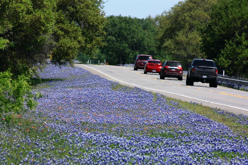 Beauty In Nature Bluebonnets Day Growth Land Vehicle Nature No People Outdoors Road Roadside America ROADSIDE TEXAS Spring Flowers Texas Hill Country Texas Landscape Transportation Tree