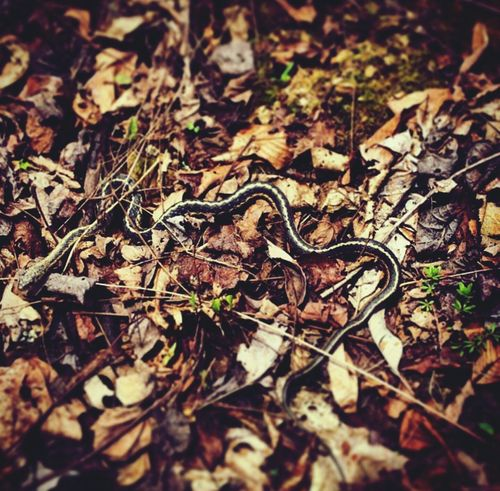 Slither Walking Around Slithering Slithery Little Snake Snake Reptile Nature_collection Nature Nature Photography Snakes Snakes Are Beautiful