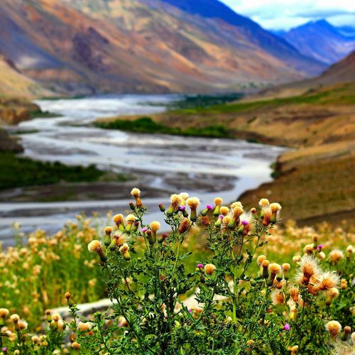 Flower Nature Beauty In Nature Plant Scenics Water Tranquility Mountain No People Outdoors Landscape Day Freshness Fragility Flower Head