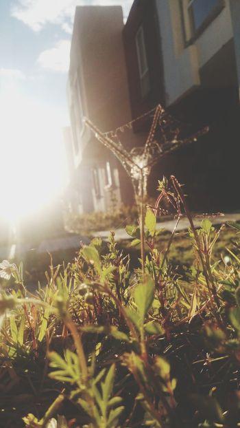 I love nature more than I love people. Nature Sunny☀ Autumn