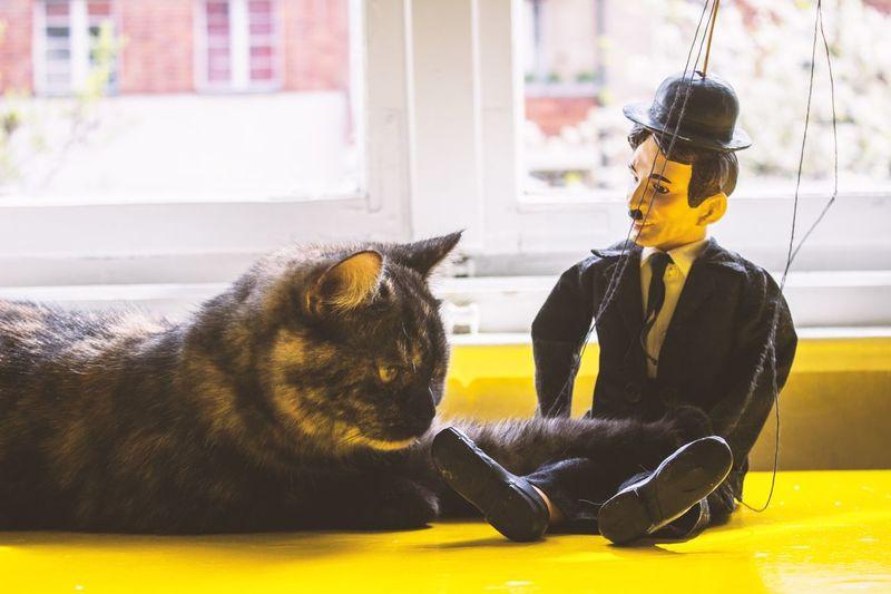 Cat staring at charlie chaplin puppet