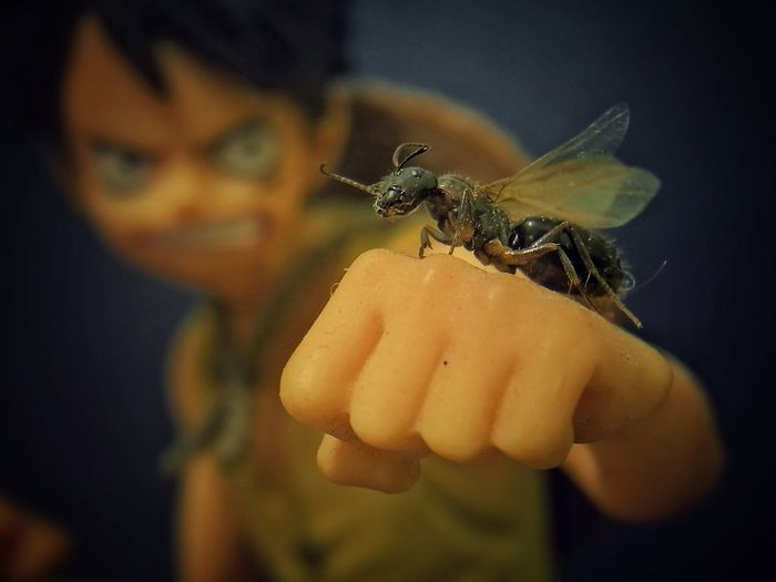 Antz Human Hand Child Insect Spider Close-up Butterfly - Insect Fly