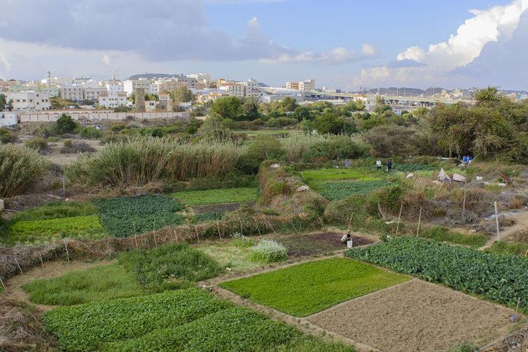 abha Abha Farm