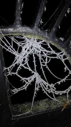 Frozen Spider Web Spider Web Fragility Night Black Background Close-up Frozen Spiderweb Frozen Spider Web In Night