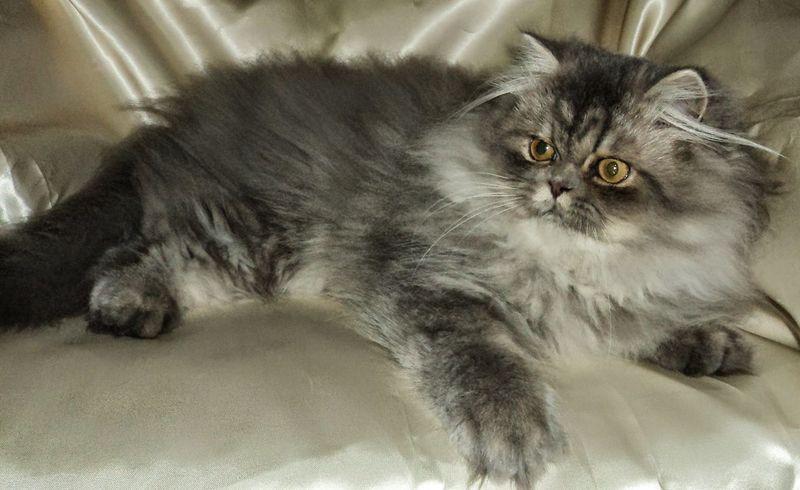 Pets Cats Of EyeEm Streamzoofamily Symplicity