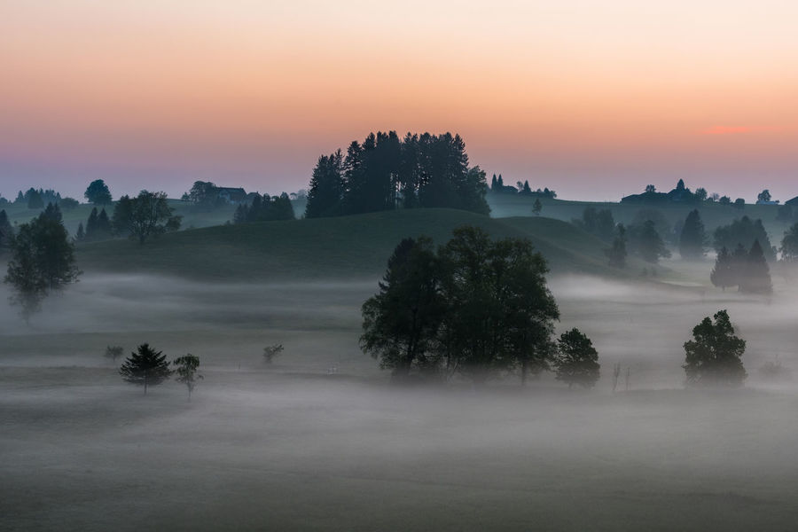 This is going to be a good day Misty Morning Nature Tranquility Trees Beauty In Nature Early Morning Fog Hazy  Landscape Mist Nature No People Orange Color Outdoors Rural Scene Scenics - Nature Sky Spring Springtime Sunrise Tranquility Tree