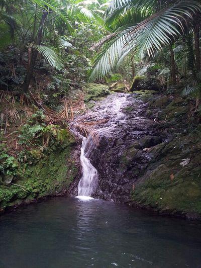Roadtrip Puerto Rico Toro Negro