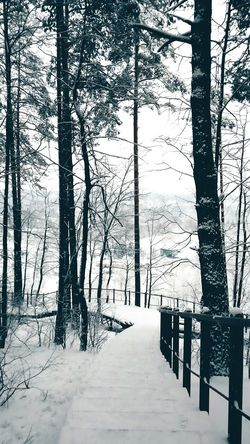 Winter in Lithuania // Tree Nature Beauty In Nature Tranquility Outdoors Winter Cold Temperature Snow Winterwonderland Nature Lithuania Lithuania Nature <3 Forest View