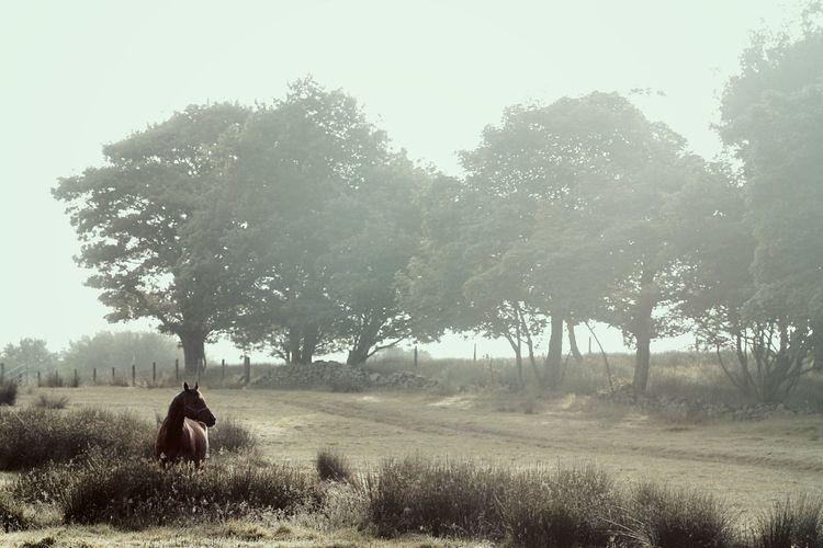 Horse And Trees. Hazy Sunshine