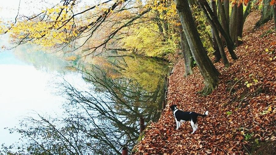 Dog Walking Colors Of Autumn Limmat <3 Dietikon Walking with Lilly my Foxterrier Monday morning