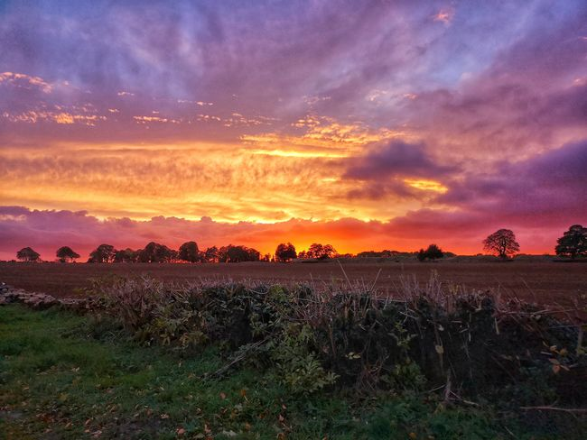 Gorgeous sunset Orange Sky Field Beauty In Nature Seemooore Huawei P20 Pro Leica Lens Mobilephotography Photography Photo Of The Day EyeEm Selects Flower Tree Multi Colored Sunset Rural Scene Beauty Agriculture Field Springtime Poppy Dramatic Sky Atmospheric Mood Romantic Sky Moody Sky Cloudscape