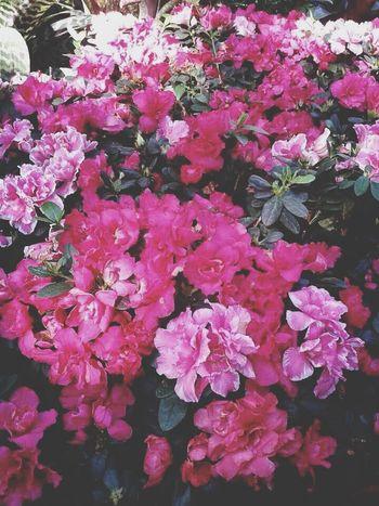 Flowers Beautifulday Beautiful Baanpanda
