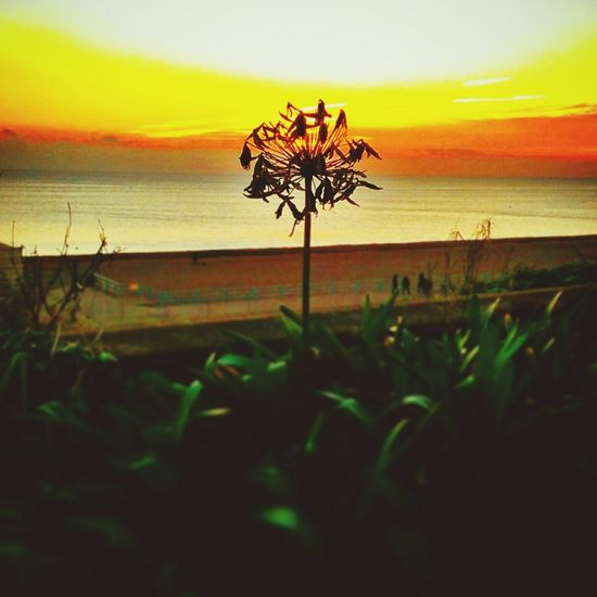 Flower and sunset. Sunset Flower Beach Beautiful