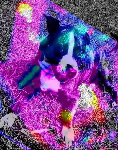 rainbow bathed innocence? EyeEm Team Teacher Kitty+ Student Mutt Ugh, Another Mutt In Training, Kitty School Of Hard Knocks Reflection Eye EyeNewHere Tranparent Dog Eyes Wide Open A Very Good Dog Shades Of Ultra Violet Black & White With Rainbow Light Innocence?  Rainbow Bathing Pixelated Digitally Generated
