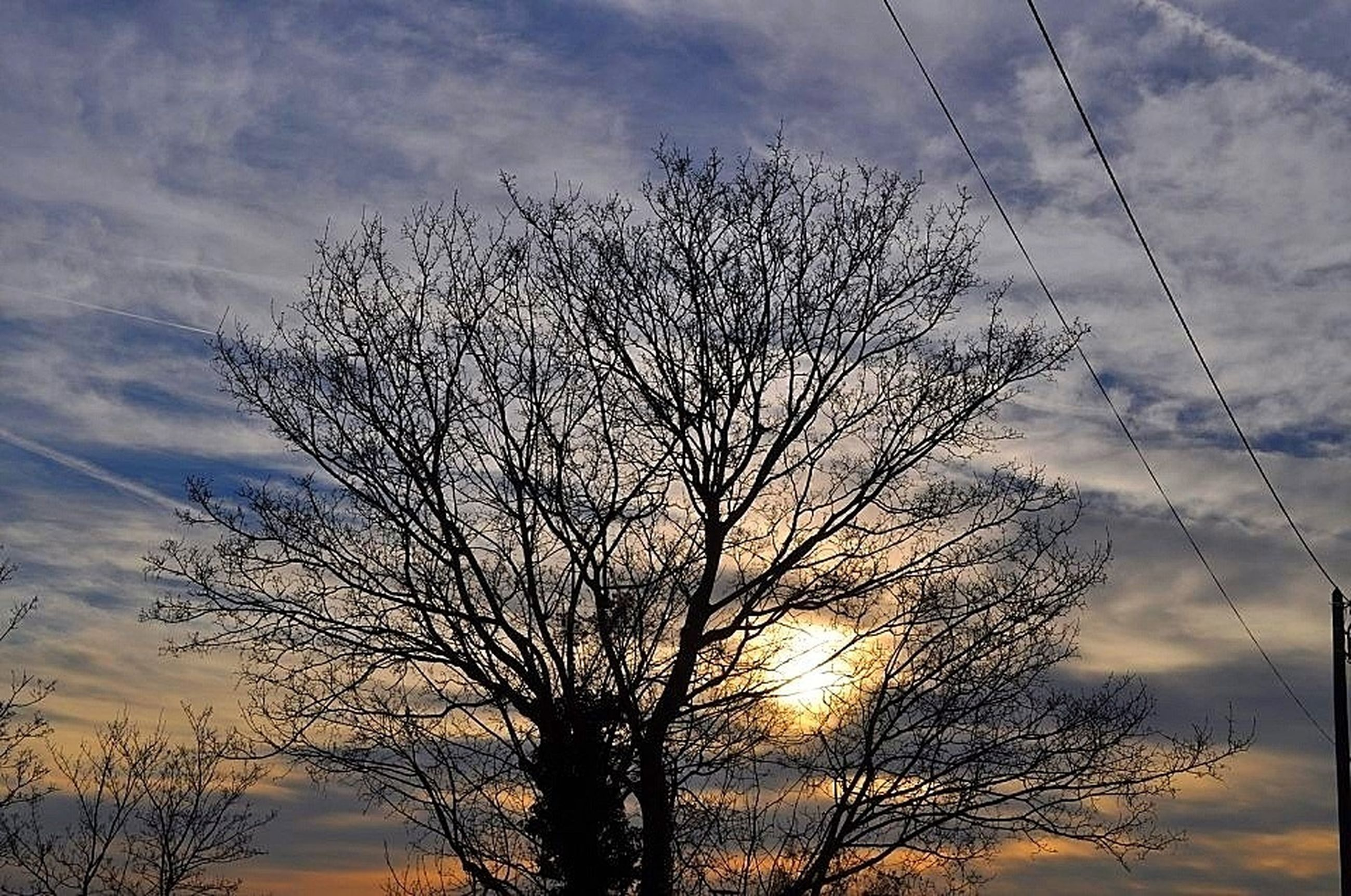 silhouette, bare tree, sunset, sky, low angle view, tree, tranquility, branch, beauty in nature, cloud - sky, scenics, tranquil scene, nature, sun, cloud, cloudy, idyllic, outdoors, sunlight, no people