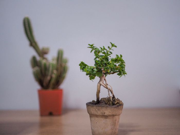 Close-up of small potted plant on table