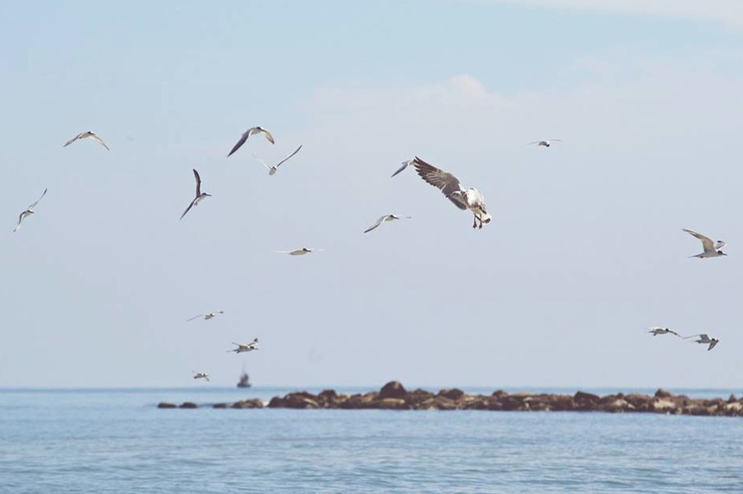 bird, flying, animals in the wild, animal themes, water, sea, wildlife, waterfront, seagull, spread wings, mid-air, flock of birds, sky, horizon over water, nature, medium group of animals, beauty in nature, scenics, day