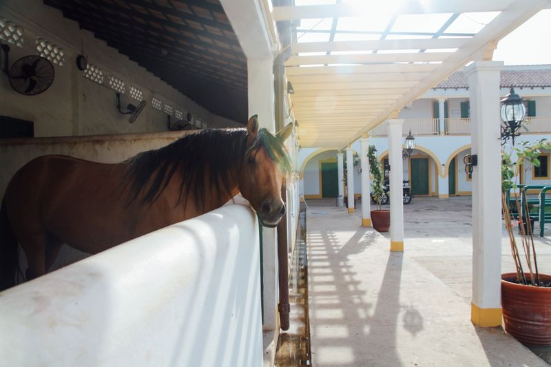 Brown Horse In Stable During Sunny Day