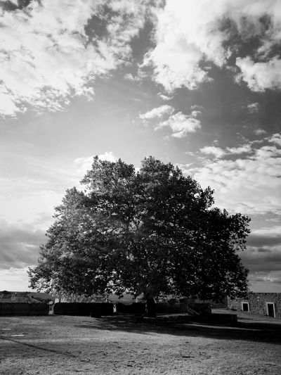 """""""I see trees of grey..."""" Portugal Abrantes Beautiful View Cloudy Day Blackandwhite Grey Sky Cloud - Sky"""