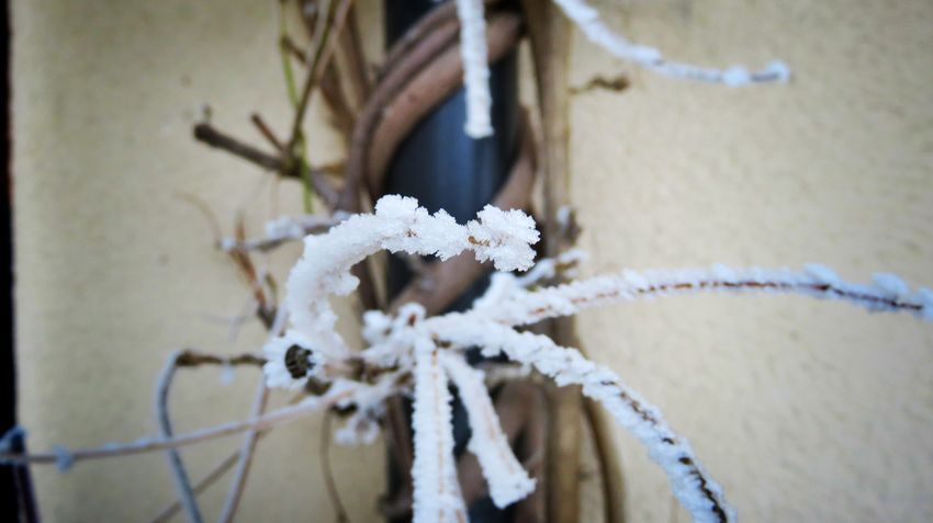 Cold Temperature Winter Snow Close-up Hanging Outdoors No People Day Beauty In Nature Canon Canonpowershot Auvergne Allier Beautiful Winter Beautifulview Canonphotography Fragility Flower Branch Plant