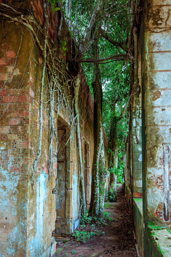 Ruins of Paricatuba - House built in Paricatuba, state of Amazonas, in the year of 1889, first used as a shelter for Italian immigrants, and later was a high school of arts and crafts, a public jail and a leprosarium. Abandoned Buildings Amazon Amazonas Nature No People Paricatuba Ruins Tree
