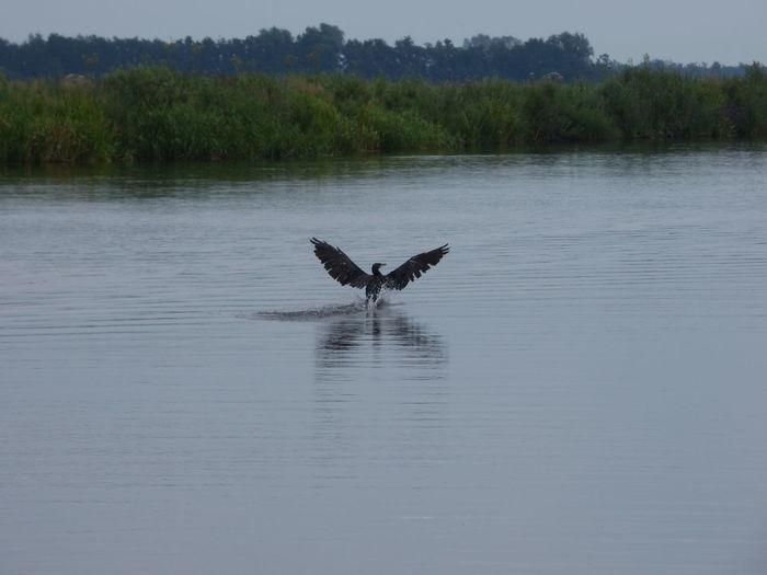 Bird landing on
