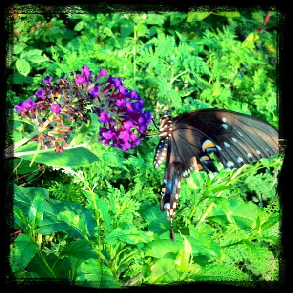 Flower & Butterfly Enjoying Life Loving Life! Nature_collection #flowers