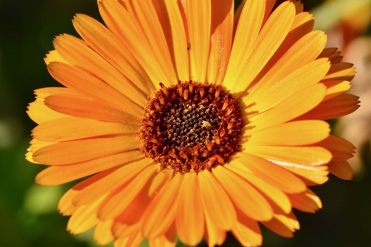 Close-up of orange flower blooming in park during sunny day