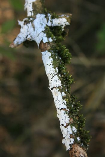 Taking Photos Check This Out Outdoor Photography Outside Photography Out And About Outside Nature Nature Photography Tree Branches Branch Branch Of A Tree Barks Of A Tree Bark Texture Moss-covered Moss In Macro Moss On Bark Moss On Branches