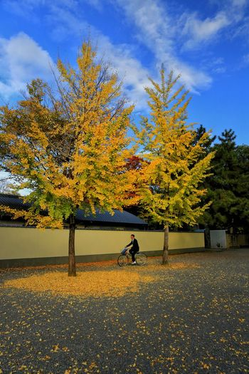 Cycling Through Autumn Autumn Autumn colors Autumn Leaves autumn mood Autumn🍁🍁🍁 Autumn Collection Nature Nature Is My Religion Sky Cycling Man Street Streetphotography Street Photography Traveling Travel Photography Travelphotography Garden EyeEm Best Shots EyeEmNewHere EyeEm Nature Lover EyeEm Selects EyeEm EyeEm Gallery EyeEmBestPics Eyeemphotography EyeEm Masterclass Travel Destinations Travel Japan Japan Photography EyeEmbestshots Tree Water Sky Cloud - Sky Growing Calm Idyllic Tranquil Scene Blooming Fall Scenics Tranquility