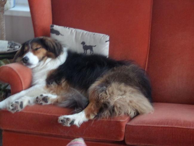 Dog Life Pip Sleeps Pip Snooze After Walks