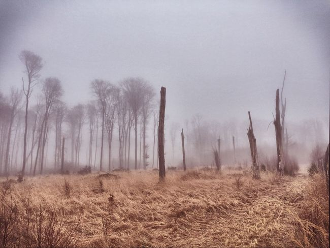 Forest Storm Post Storm Landscape