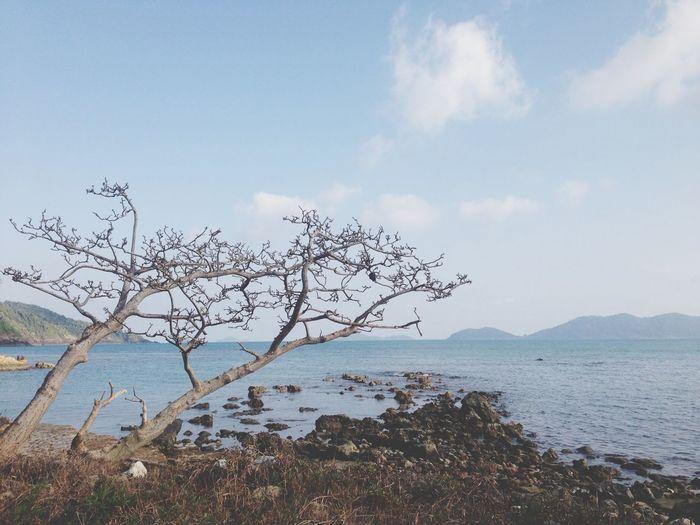 Kohchang Träd Thailand TBT  Flashback Sunshine Island Holiday Beach Sun