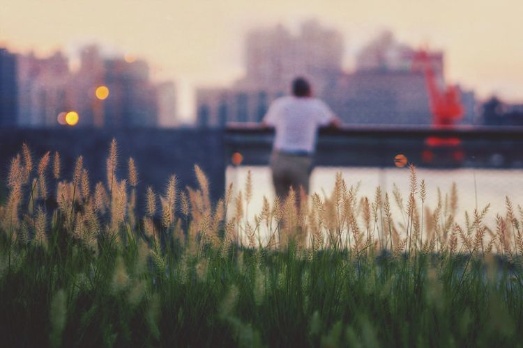 Overlooking and contemplation Overlooking Huangpu River Landscape Riverside Reeds Dusk Shore Shoreside Walker Old Man Autumn Mood My Best Photo The Art Of Street Photography