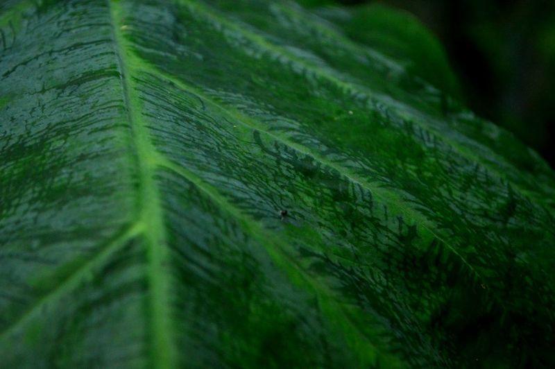 Close-Up Of Wet Leaf
